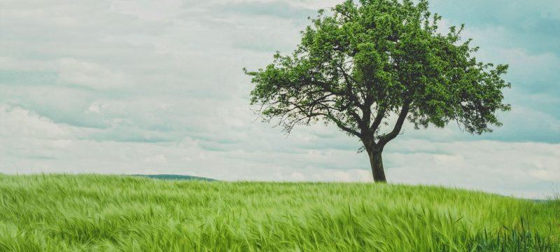 Jeder Baum zählt